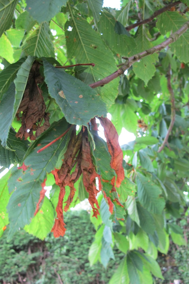 Sadly our tree is suffering from a disease. Tree disease is increasingy becoming a huge problem for trees and woodland.