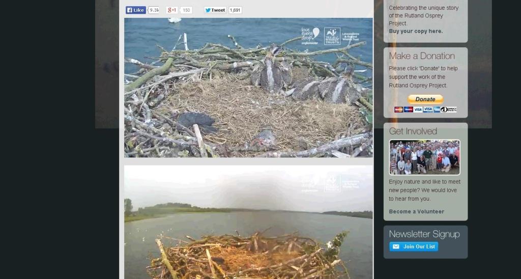 osprey webcam