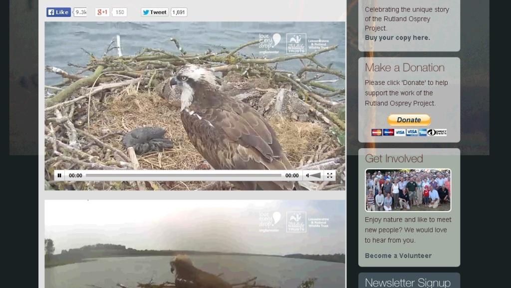 webcam osprey parent