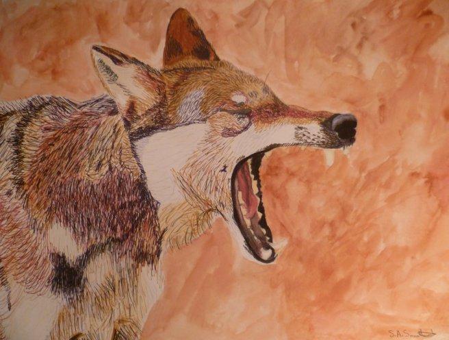 Yawning Gray Wolf