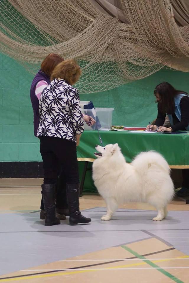 Dog showing