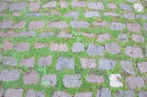 Grass growing between cobbles