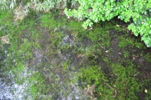Clear water in the stream