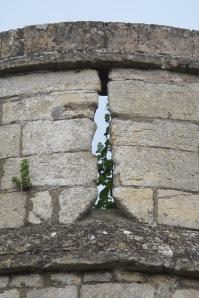 Greenery in castle battlements