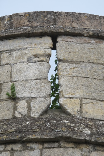 Greenery in castle battlements