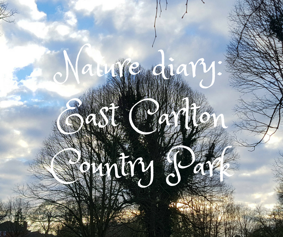 Nature diary_ East Carlton Country Park