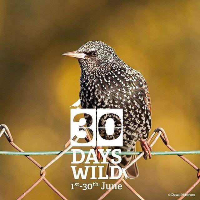 30 days wild starling