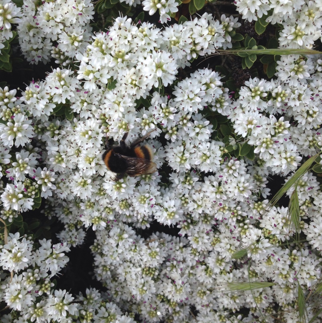 bee on bush